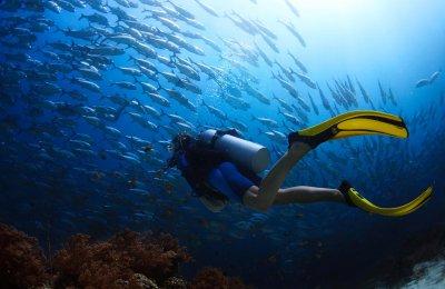 Safaris de plongées