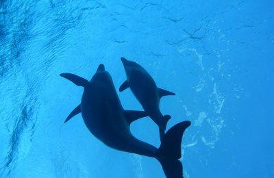 Delfinsafaris