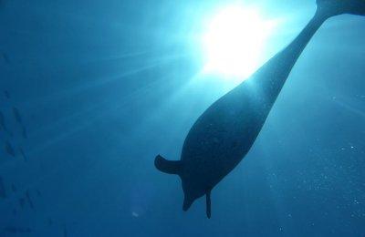 Delfine während unserer Safari