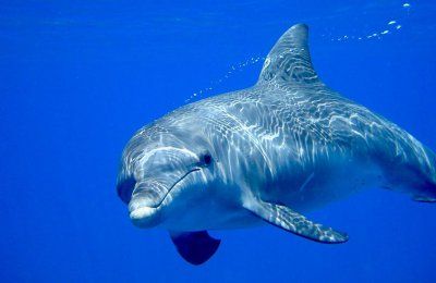 Tagesausflug zu den Delfinen